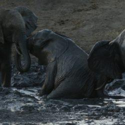 Elephants_OK.jpg
