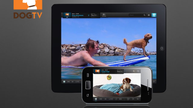 Dog TV.001.jpg